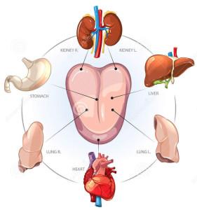 chinese-tongdiagnose-kijk-binnen-menselijk-lichaam-64980794