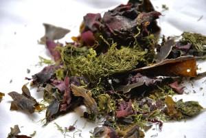 seaweed-1489512_960_720